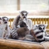 Découvrir l'île de Madagascar à travers ses sites naturels emblématiques